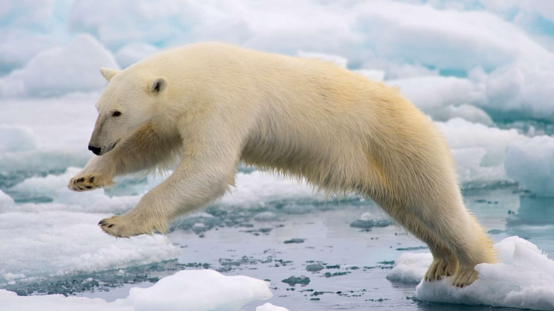 Caro orso polare, perdonaci